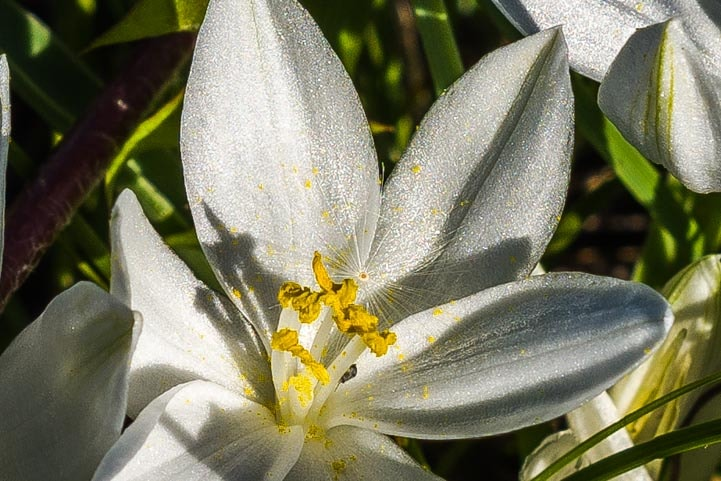 Silvery spring flowers in Wyoming-min