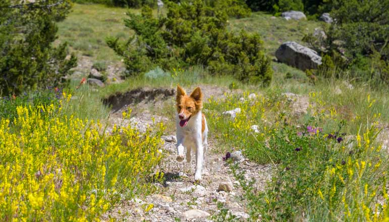 Trotting puppy on a hike in Wyoming-min