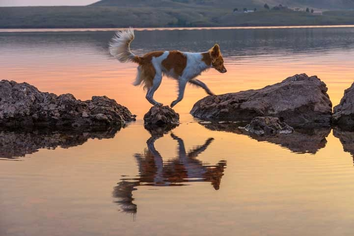 Puppy on rocks in northeastern Wyoming at sunrise-min
