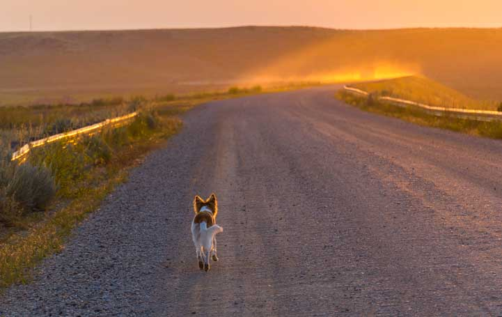 Puppy trotting down dirt road in northeastern Wyoming at sunrise-min