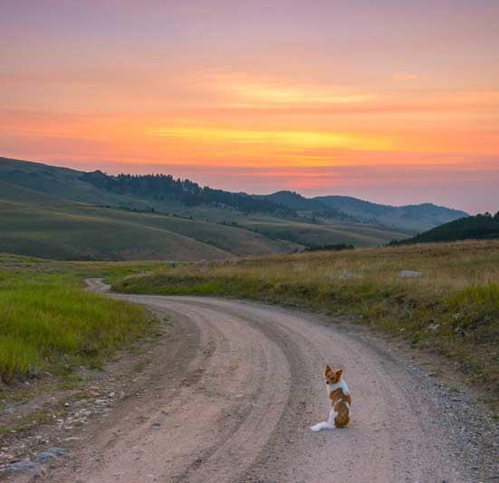 Puppy on a dirt road at sunrise northeastern Wyoming RV trip-min