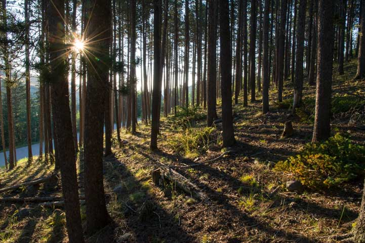 Morning in the woods in teh Big Horn Mountains of Wyoming-min