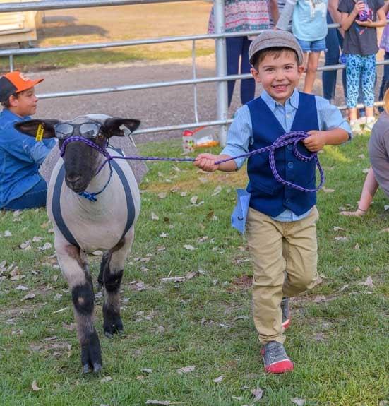 Johnson County Fair Wyoming sheep and kids festival-min