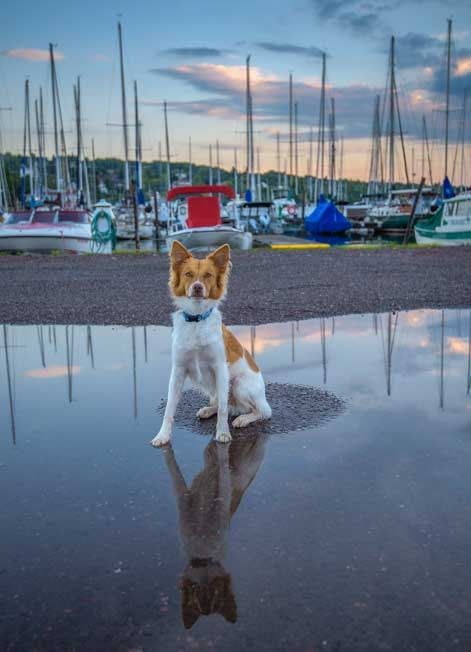 Puppy in a puddle Bayfield Wisconsin Lake Superior-min