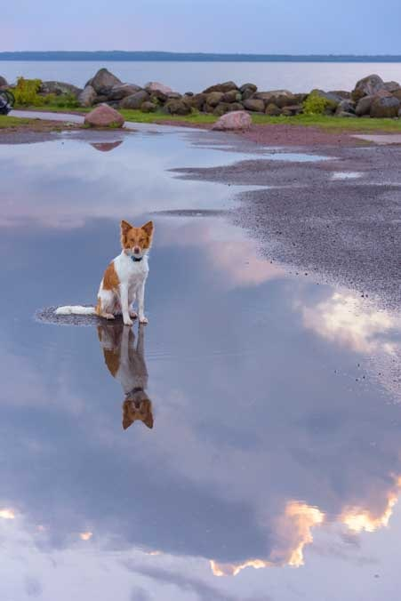 Puppy puddle reflection Lake Superior Wisconsin-min