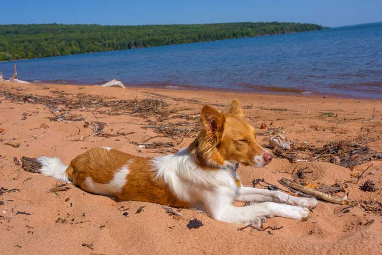 Puppy on the red sand Lake Superior Wisconsin-min