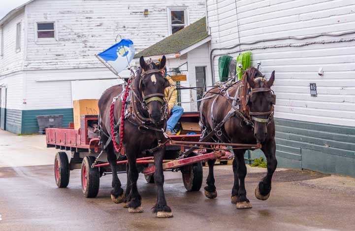 Working horses and wagon Mackinac Island Michigan-min