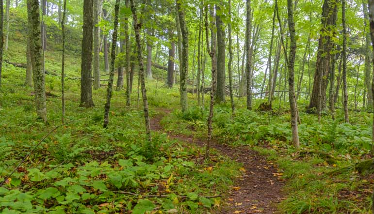 Woods hiking trail Black River Harbor Michigan-min