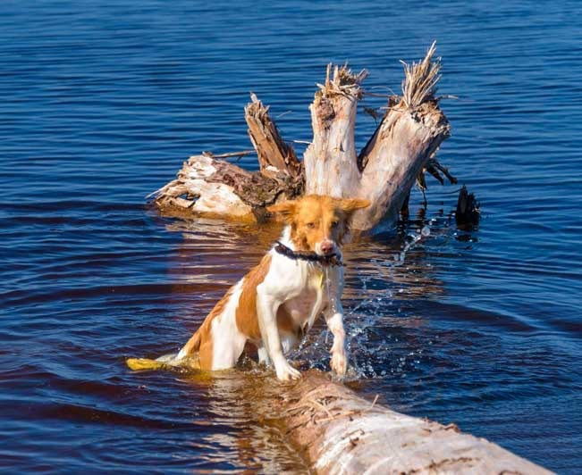 Puppy climbs out of Lake Superior with stick x