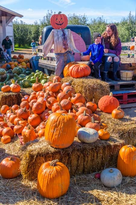 Pumpkin display Elkhart Indiana-min