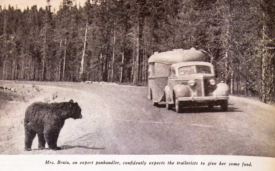 Trailer driving past Bear in Yellowstone National Park 1937 Trailer Travel Magazine RV-MH Hall of Fame and Museum Elkhart IN-min