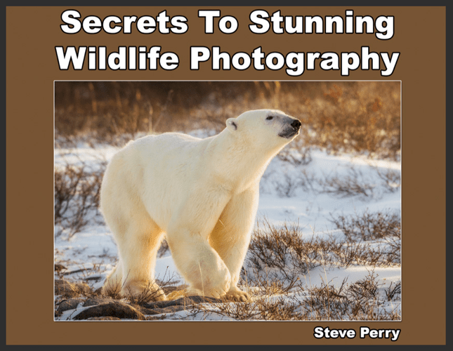 Secrets to Stunning Wildlife Photography-min