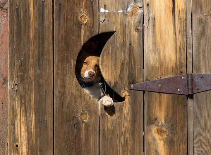 Puppy in outhouse Goldfield Ghost Town Apache Junction Arizona-min