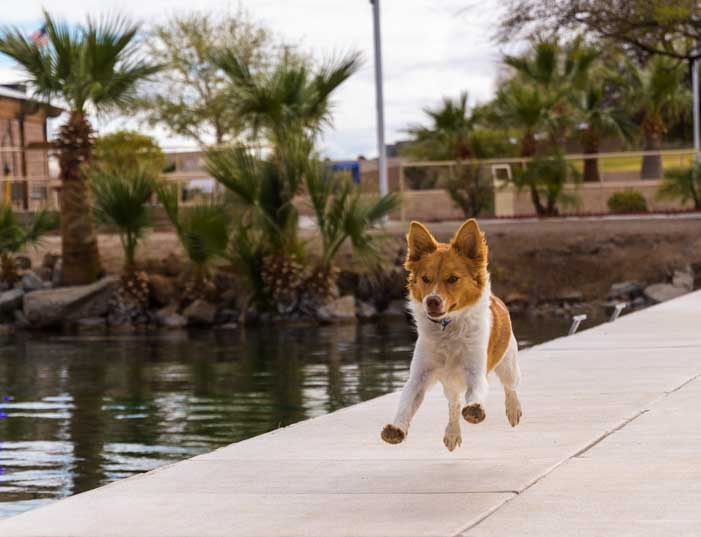 Puppy jumps for joy Colorado River Arizona-min