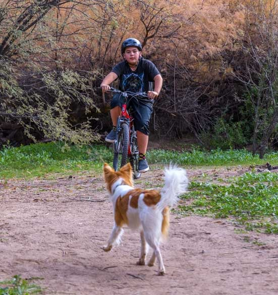 Surprise encounter between puppy and mountain bike-min