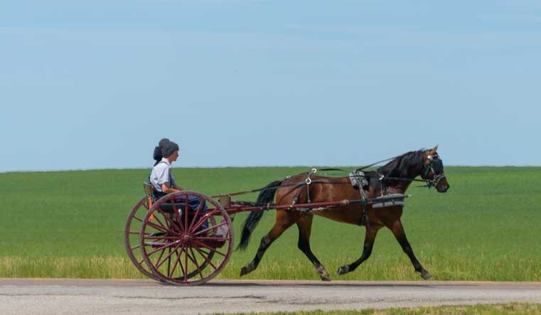 Amish buggy trots through Eddie's Corner Montana-min