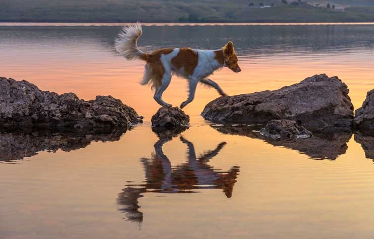 Puppy at the lake in Big Horn Mountains at sunrise-min