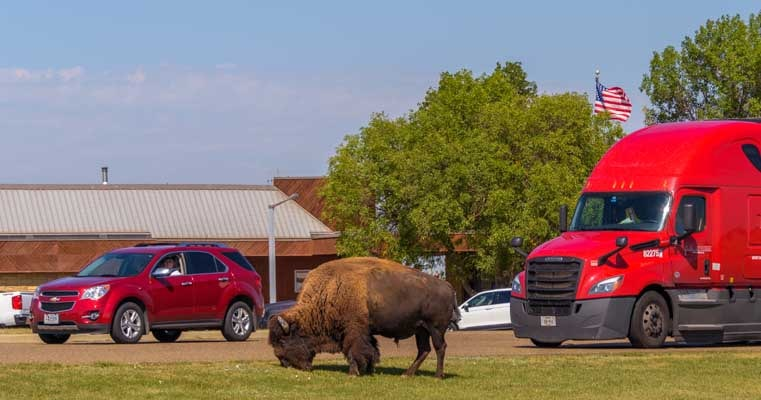 Bison greeter at Roosevelt National Park visitors center in North Dakota-min