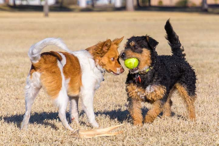 Puppies play with a ball-min