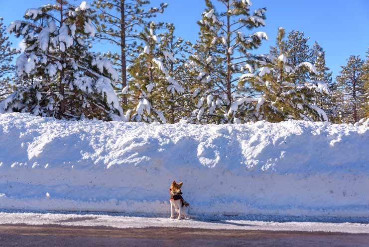 Deep snow at Bryce Canyon National Park in Winter-min