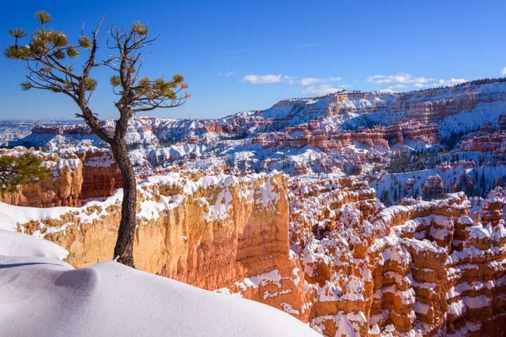 Bryce Canyon National Park view with pine tree and snow-min