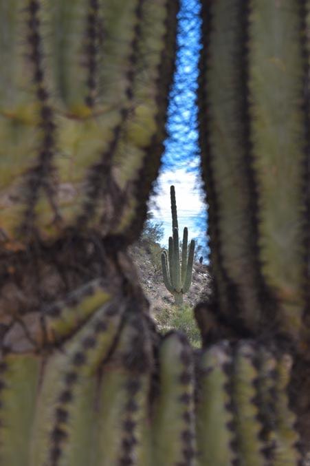 Cactus in a cactus-min