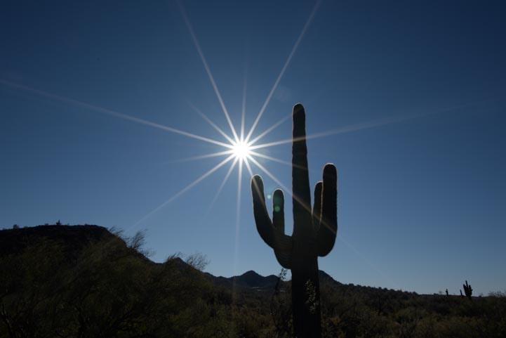 Saguaro Cactus starburst-min