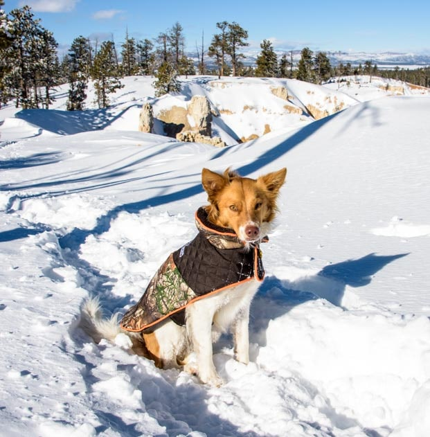 Puppy in snow at Bryce Canyon-min