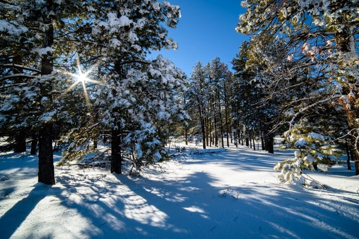 Snow on trees at Bryce Canyon National Park-min