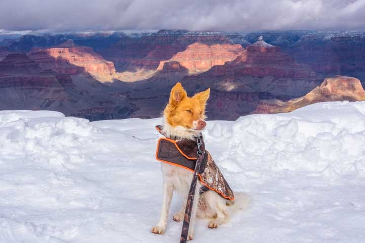 Puppy in snow at Grand Canyon National Park in snow-min-min