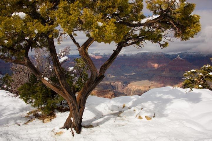 Snow at Grand Canyon National Park-min