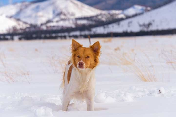 Puppy plays in snow in Flagstaff Arizona-min