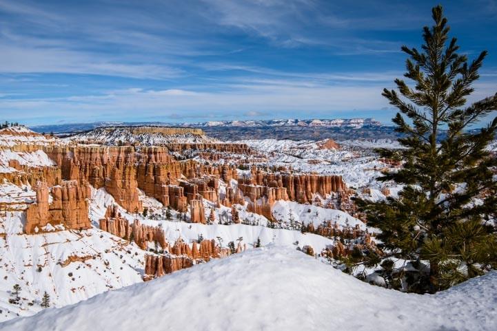 Tree at snowy overlook Bryce Canyon National Park Utah-min