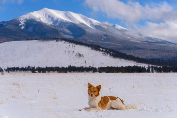 Puppy poses in snow in Flagstaff Arizona-min