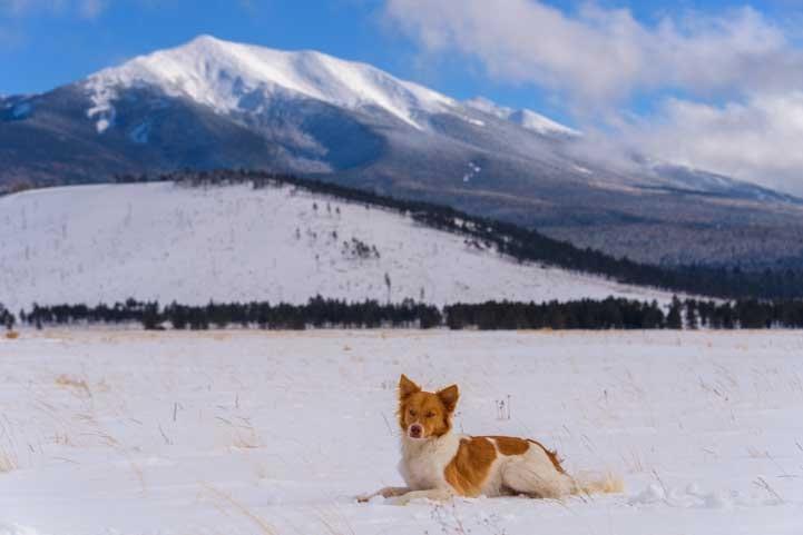 Puppy poses in snow in Flagstaff Arizona-min