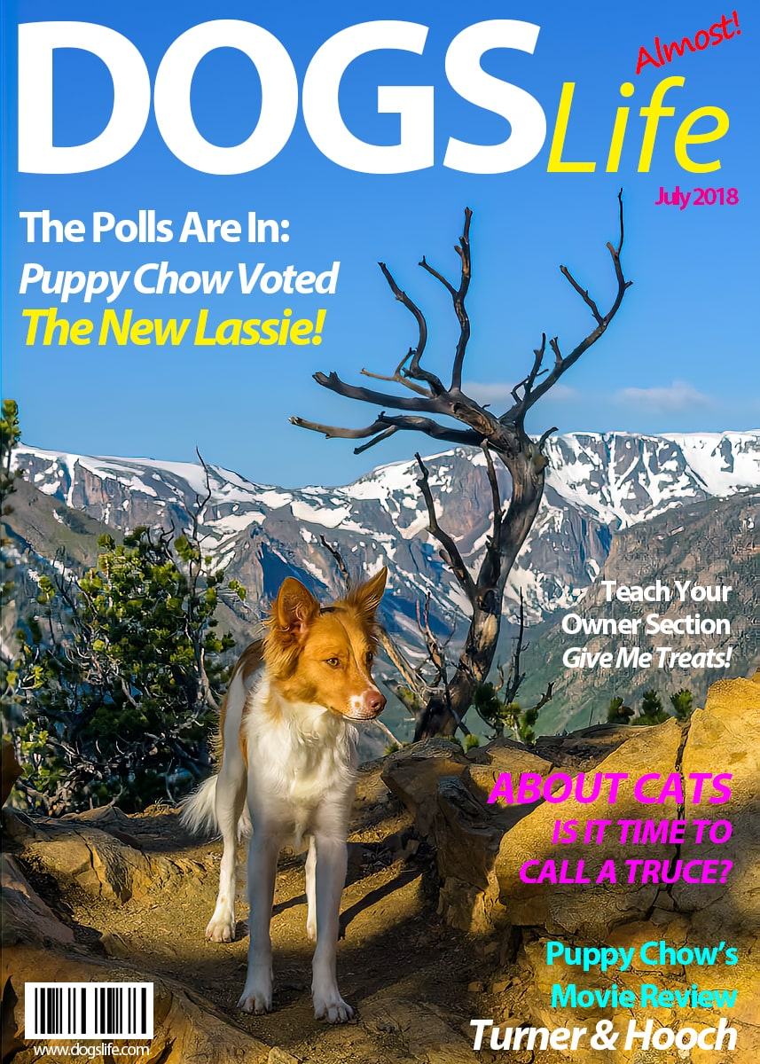 Dog's RV Life Magazine July 2018-min