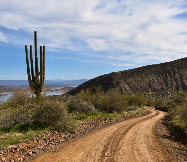 Saguaro cactus and RZR UTV trail in Arizona-min