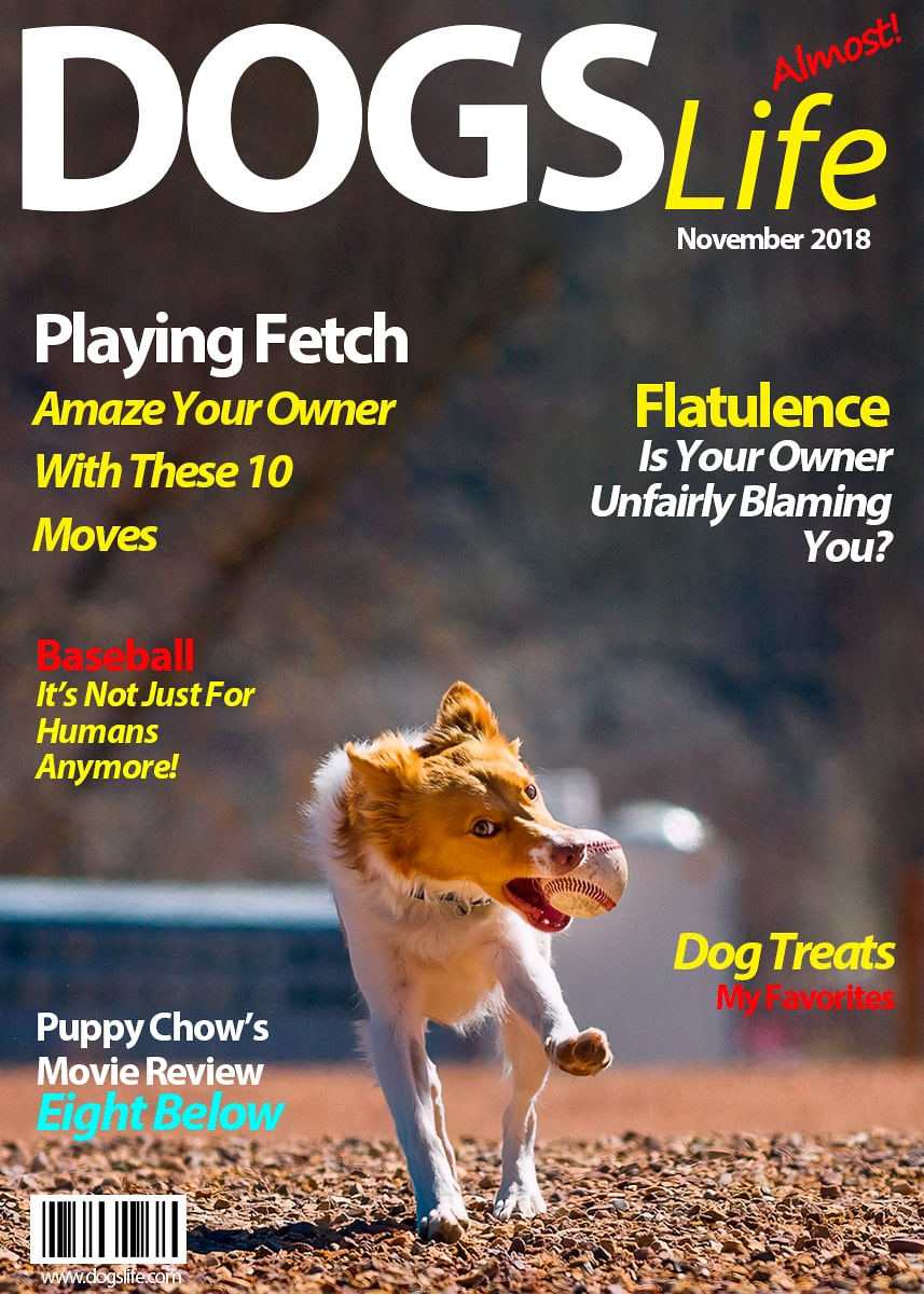 Dog's RV Life Magazine November 2018-min