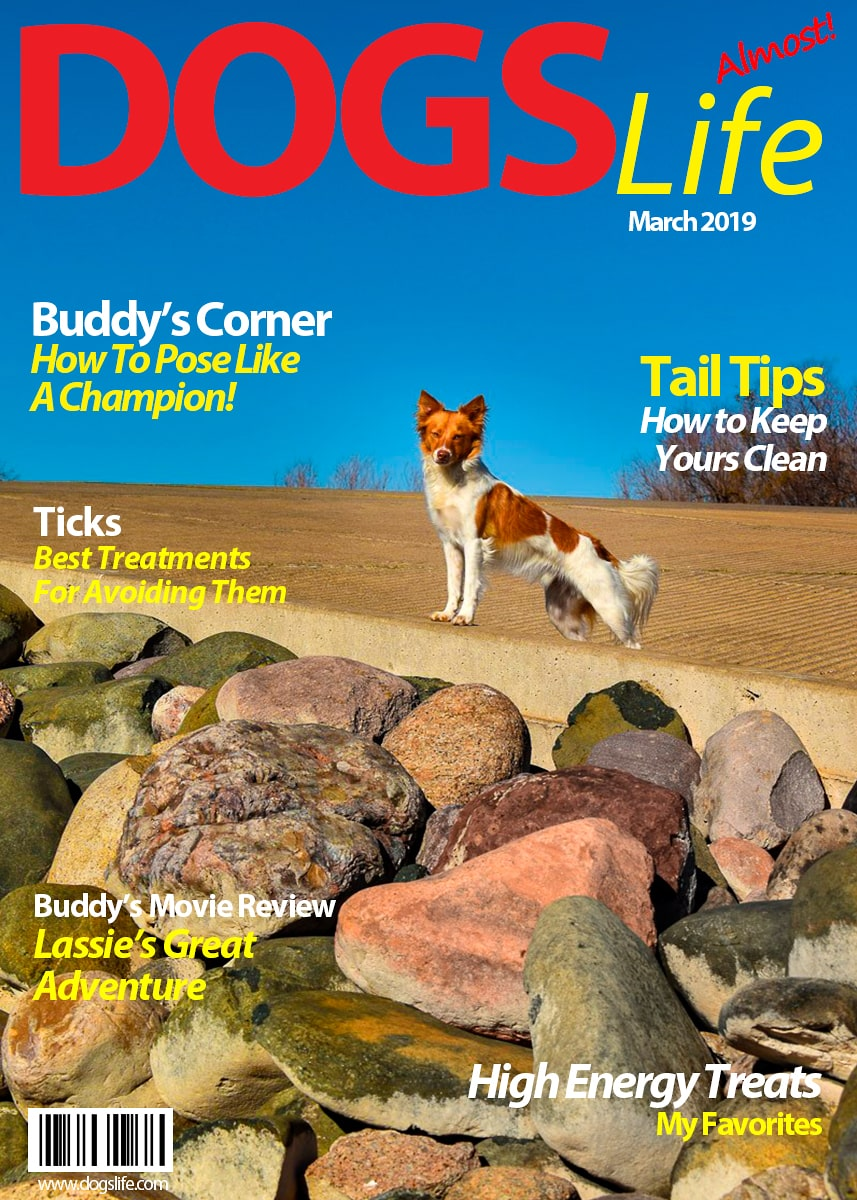Dog's RV Life Magazine March 2019-min
