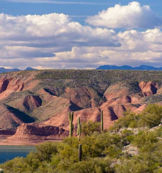 Cactus and red rocks at Roosevelt Lake Arizona-min