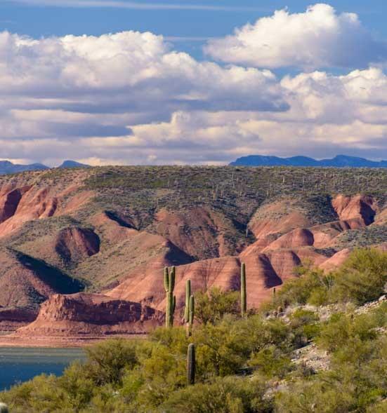 Cactus and red rocks at Roosevelt Lake Arizona-min