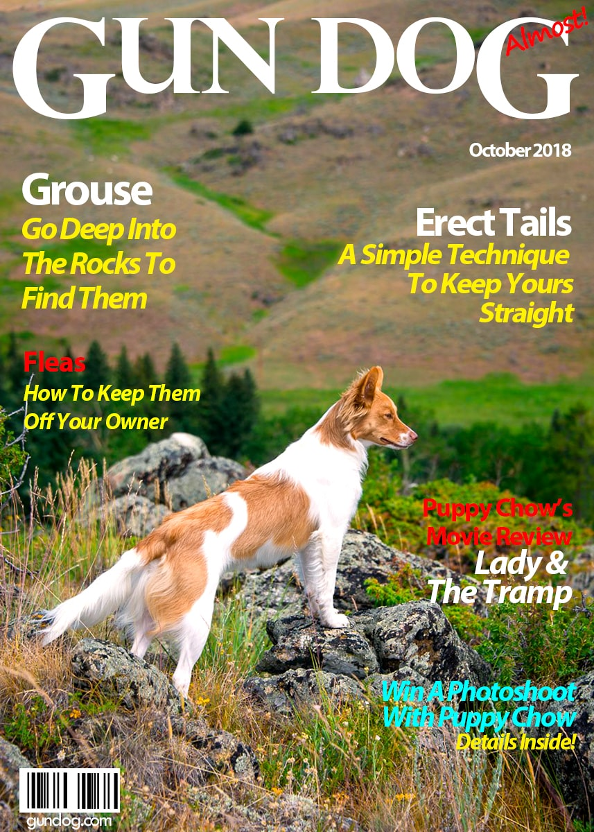 Gun Dog Magazine September 2018-min