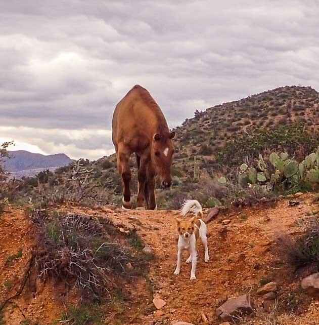 Wild horse and puppy in Arizona Sonoran Desert-min
