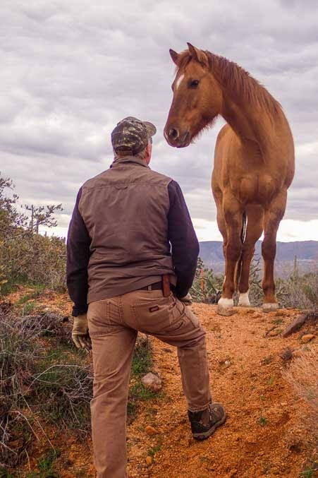 Wild horse that is tame on the Salt River in Arizona-min