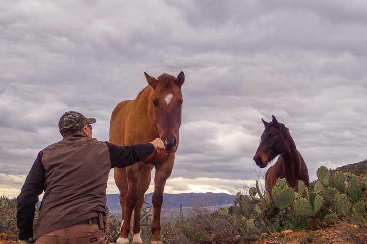 Talking to wild horses of the Salt River-min