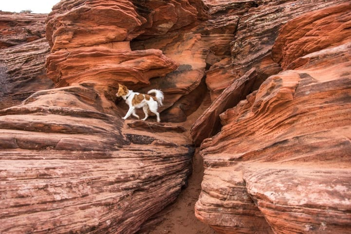 Glen Canyon Dam Scenic Overlook with puppy-min