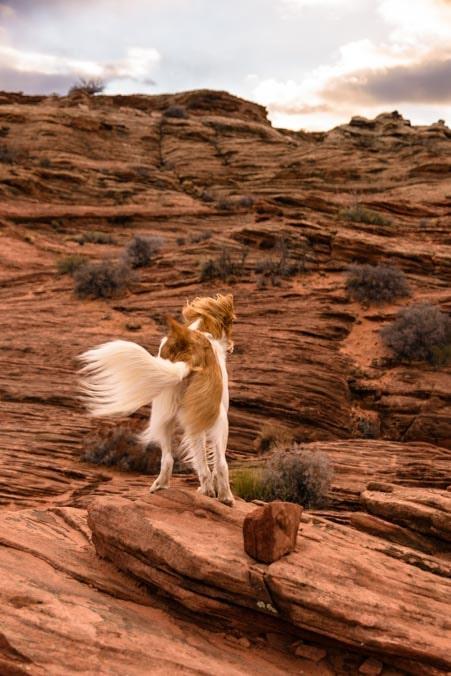 Windblown puppy Glen Canyon Dam Scenic Overlook-min