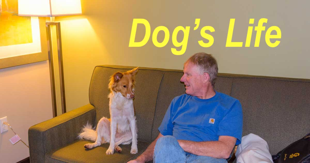 Dog's RV Life Magazine - Buddy's Got It Covered