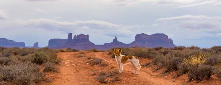 Puppy at Monument Valley Utah on RV trip-min