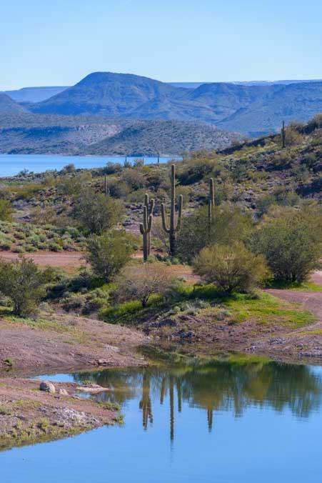 Cactus reflections Lake Pleasant Regional Park Arizona-min